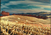 Corn_Belt_Country
